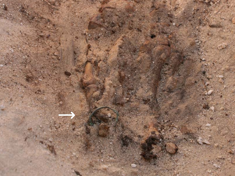 Zehenring eines Skeletts in Tell el-Amarna, Foto: The Amarna Project