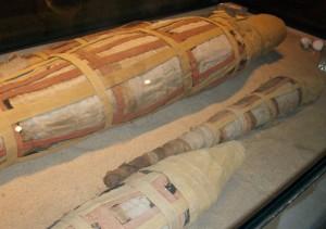 Mumifizierte Krokodile im Krokodilmuseum in Kom Ombo
