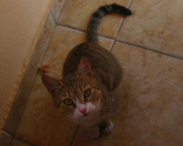 Katze in Ägypen