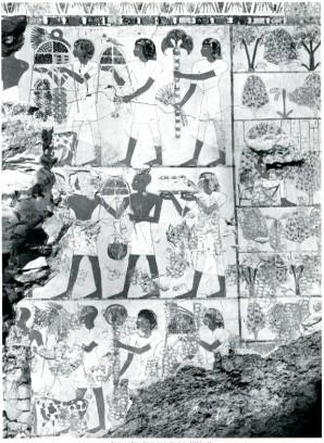 Wand im Grab des Sobekhotep 1985