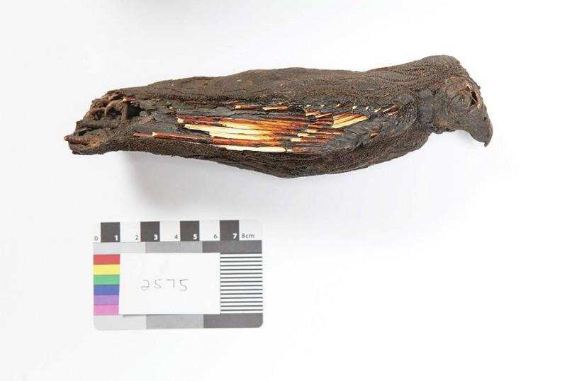 Die Vogelmumie SACHM 2575 wurde mit Hilfe von 3D Scans in der Stellenbosch Universität zurück ins Leben gerufen. Foto: Carina Beyer ©Iziko Museums.