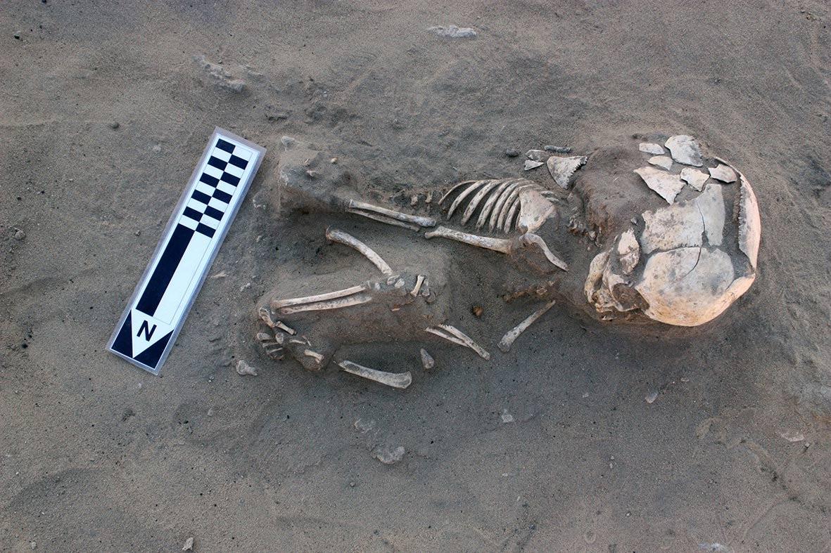 Das Skelett eines Babys mit dem womöglich ältesten Fall von Skorbut Foto: MSA
