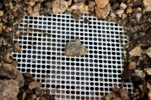 Beim Sieben entdeckt: ein kleines Amulett. Foto: The Temple Mount Sifting Project