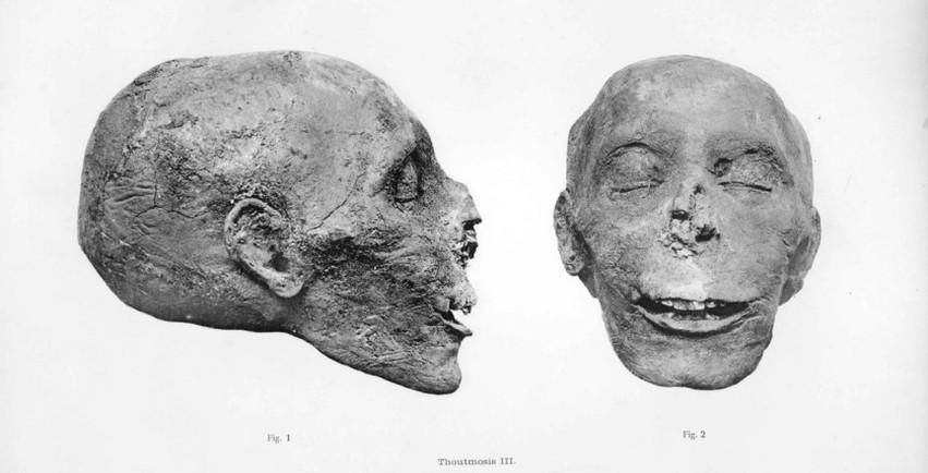 Kopf der Mumie Thutmosis III., aus dem Catalogue Général, The Royal Mummies, G.E. Smith 1912, Copyright expired