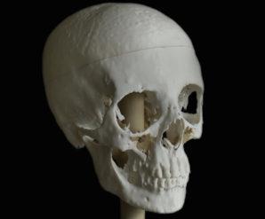 Der Schädel wurde mit einem handeslsüblichen 3D Drucker gedruckt. Foto: Paul Burston