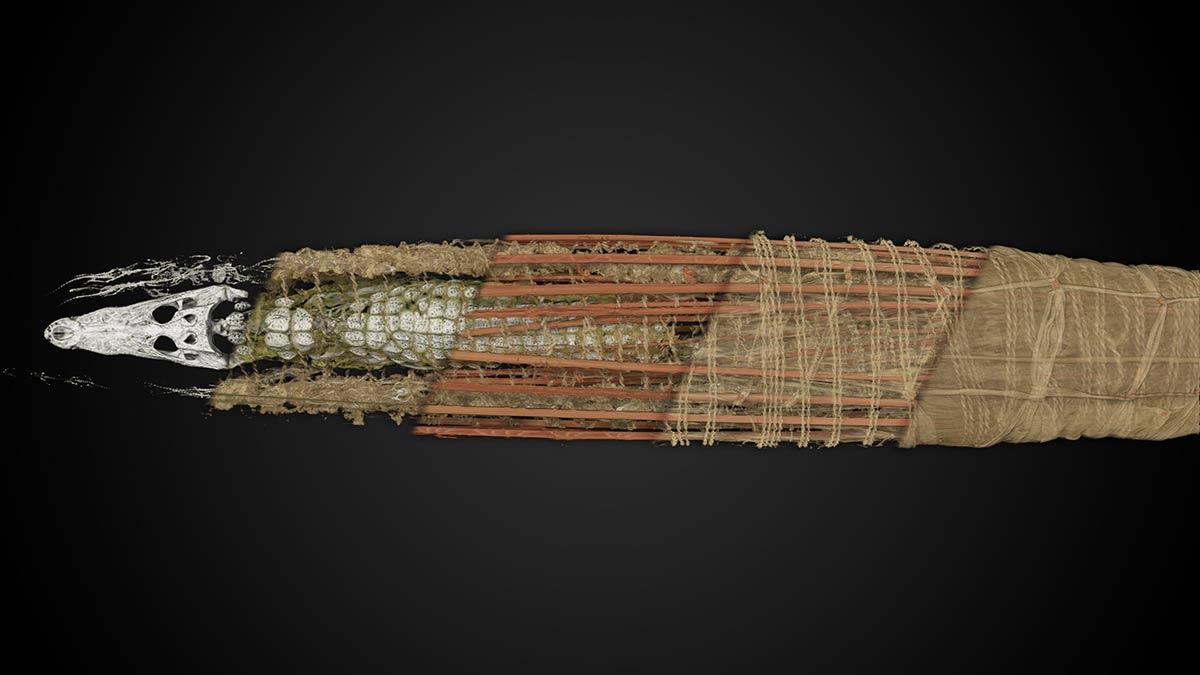 Langsam enthüllt sich die Krokodilmumie im hochauflösenden Scan. Scan: Interspectral
